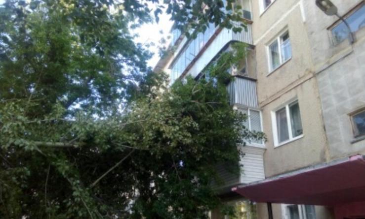 Усть-Катаве рухнувший от ветра тополь